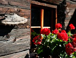 Bäuerliche Tradition in Kathainaberg im Schnalstal